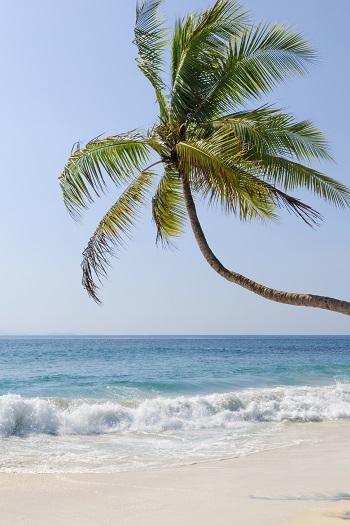 Palm tree on white sand beach