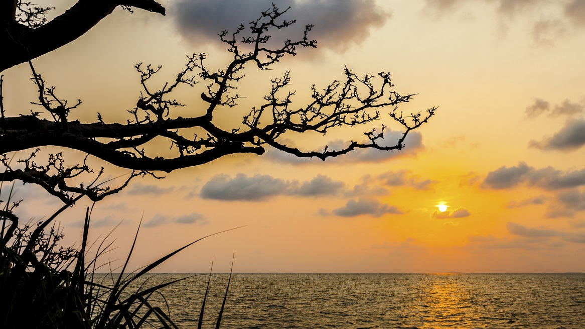 Silhouette of branch tree with sunset over sea, Secluded bay wit